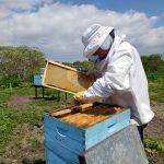 Le salvaron la vida a apicultor atacado por abejas