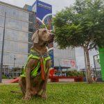 Berazategui incorporó un perro de rastreo al equipo de Defensa Civil para la busqueda de personas