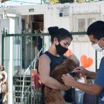Vacunación y castración gratuita en los barrios